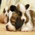 友達であり、家族でもある、大好きな「ペット」。ペット大好きな飼い主さん必見!