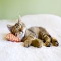 【愛猫のためにできること】たのまなペット通信講座『愛猫健康講座』のお得なキャンペーンのご案内