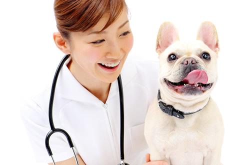 動物 看護 師 動物看護士(師)になるには|大学・専門学校のマイナビ進学