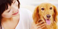 自宅で学んで「ペット介護士」の資格を認定!